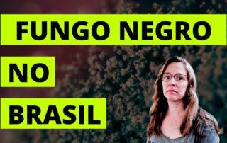 fungo negro no brasil india